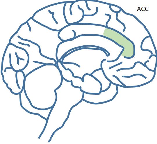 Basiswissen – wichtige Hirnregionen | Neuroleadership-concept