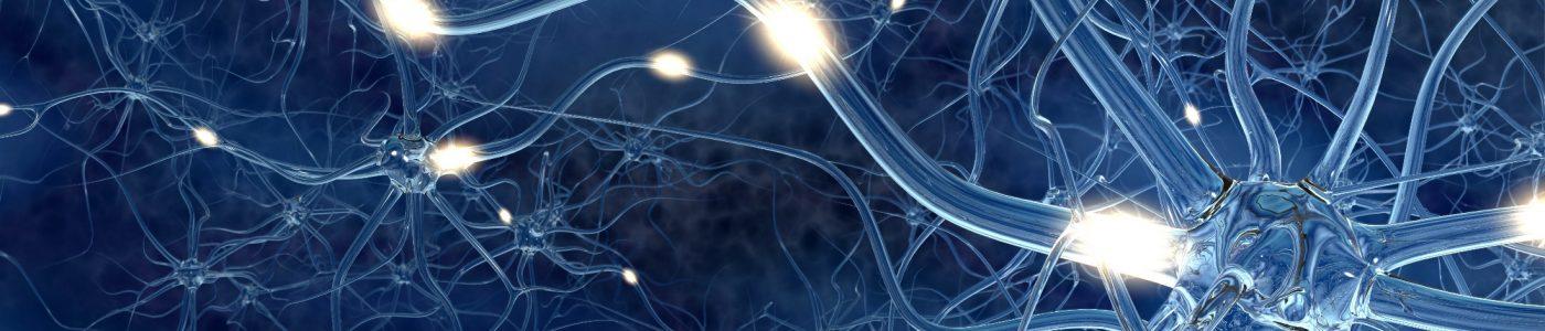 Verbund von Nervenzellen, durch die elektrische Impulse schießen