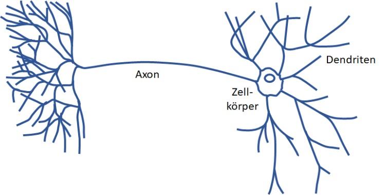 NervenzelleSchema
