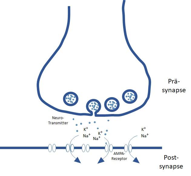 SynapseSchema